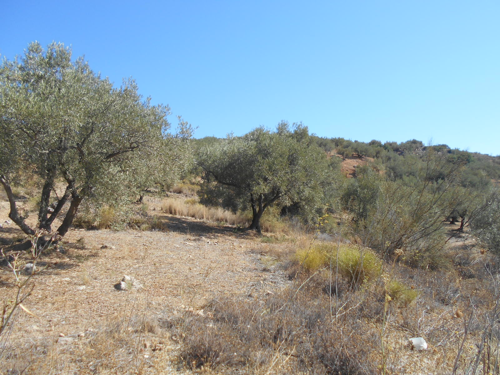 PLOT OF LAND FOR SALE BELOW PERIANA